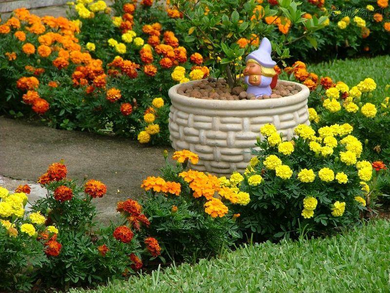 kalanchoe laranja e amarela