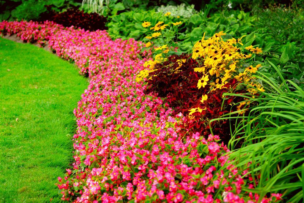 jardim colorido com flores