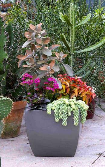 cactos, suculentas e flores