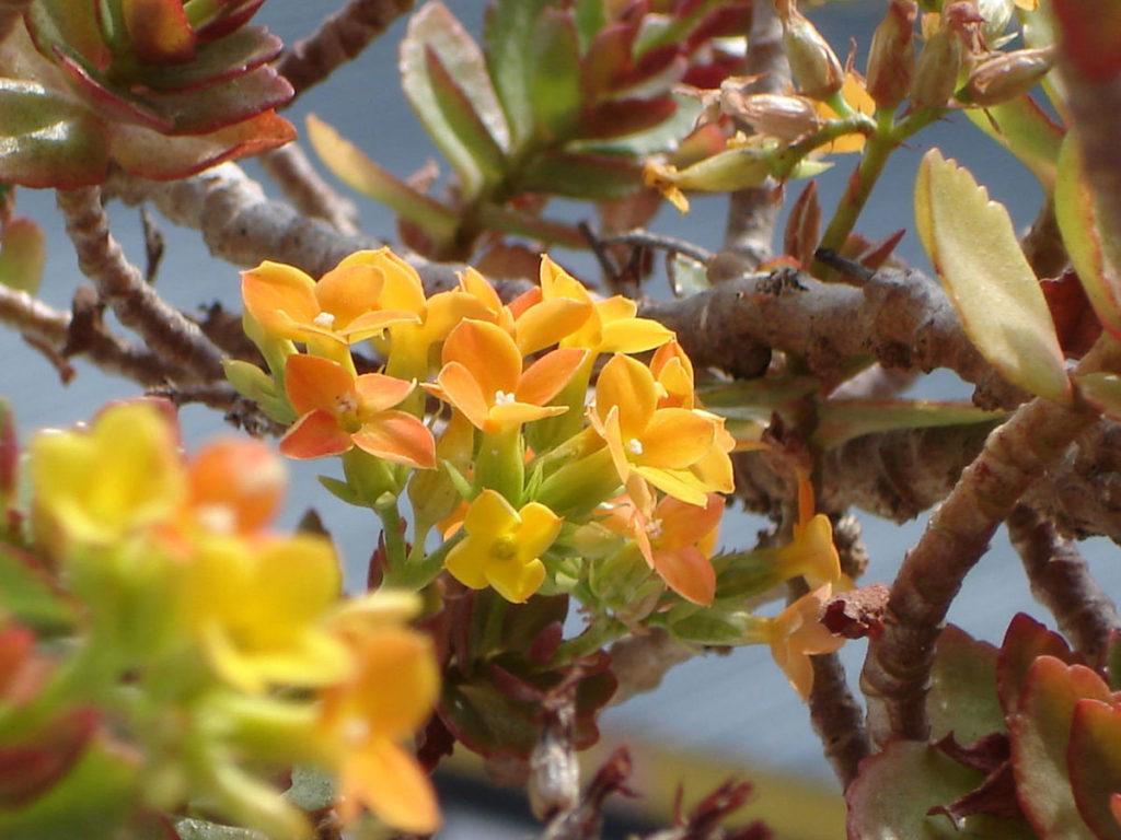planta que atrai borboletas