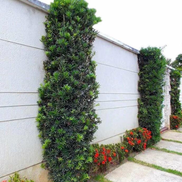 decoração de muros externos