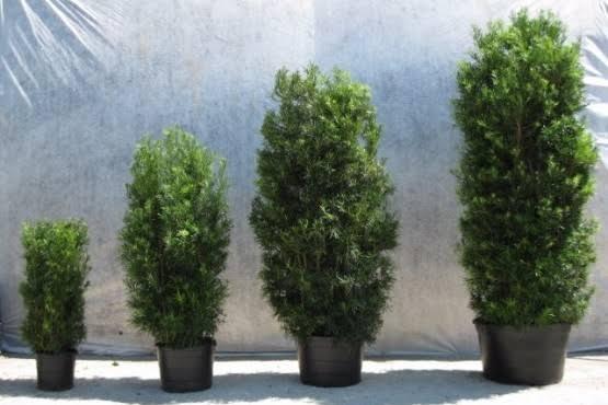 vários tamanhos de árvores