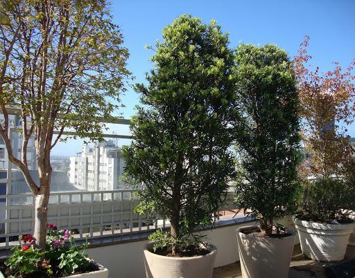 modelo de terraços com plantas