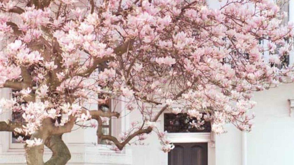 fachada com árvore
