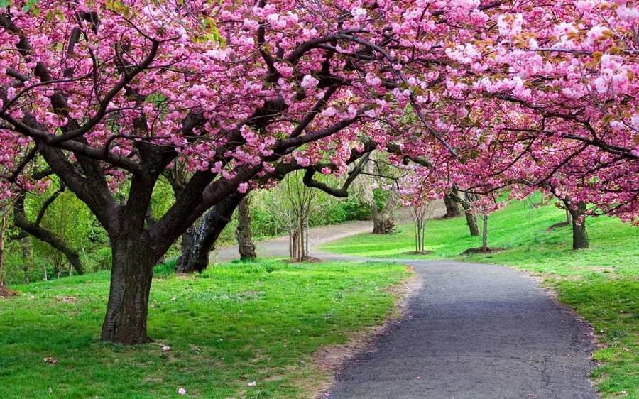 trilha com árvores floridas