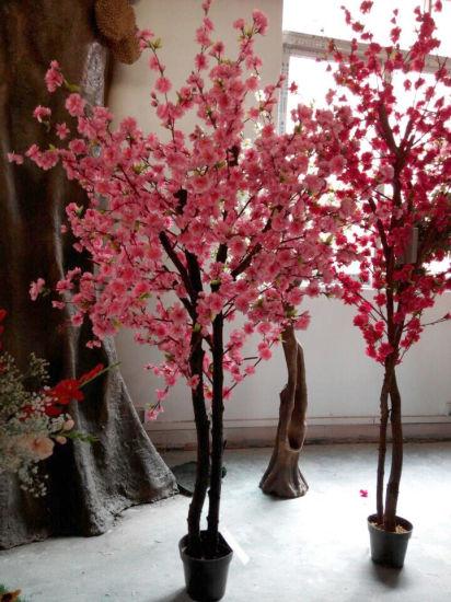 mudas de flor de cerejeira