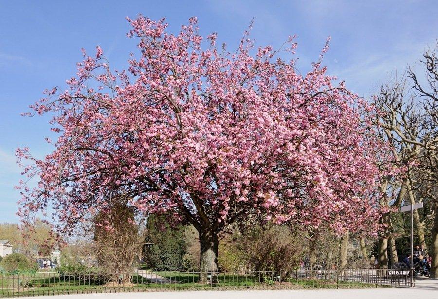 árvore grande no parque