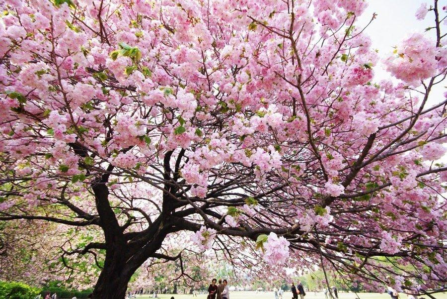 árvore adulta para se adminirar