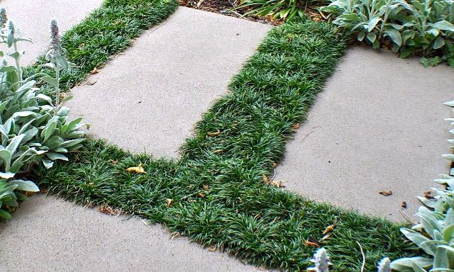 grama preta entre as pisadas