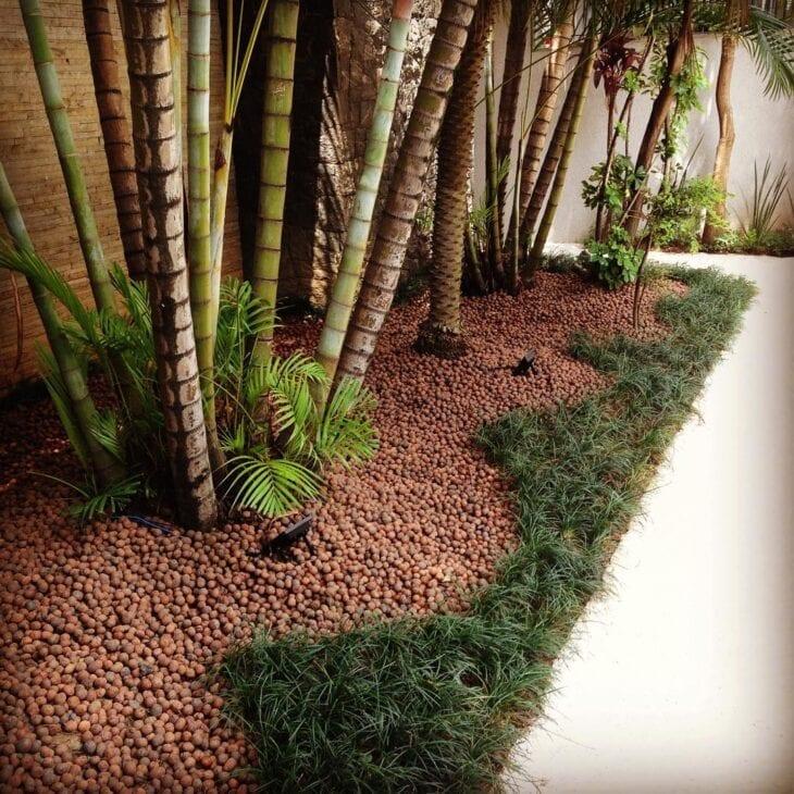 palmeiras e grama preta