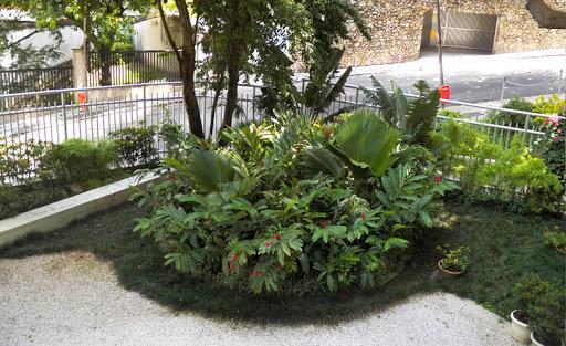 grama preta no jardim