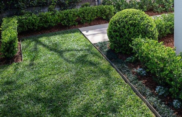 grama preta para decorar