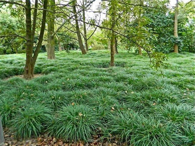 bosque com grama preta