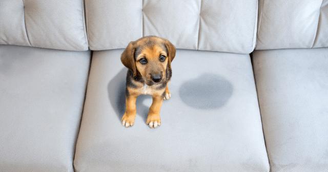 impermeabilização de sofá para evitar urina