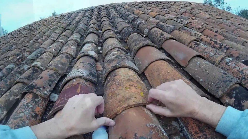 elimine animais do telhado