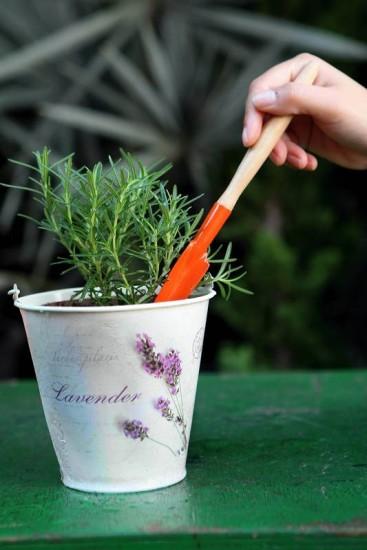 plantando alecrim no vaso
