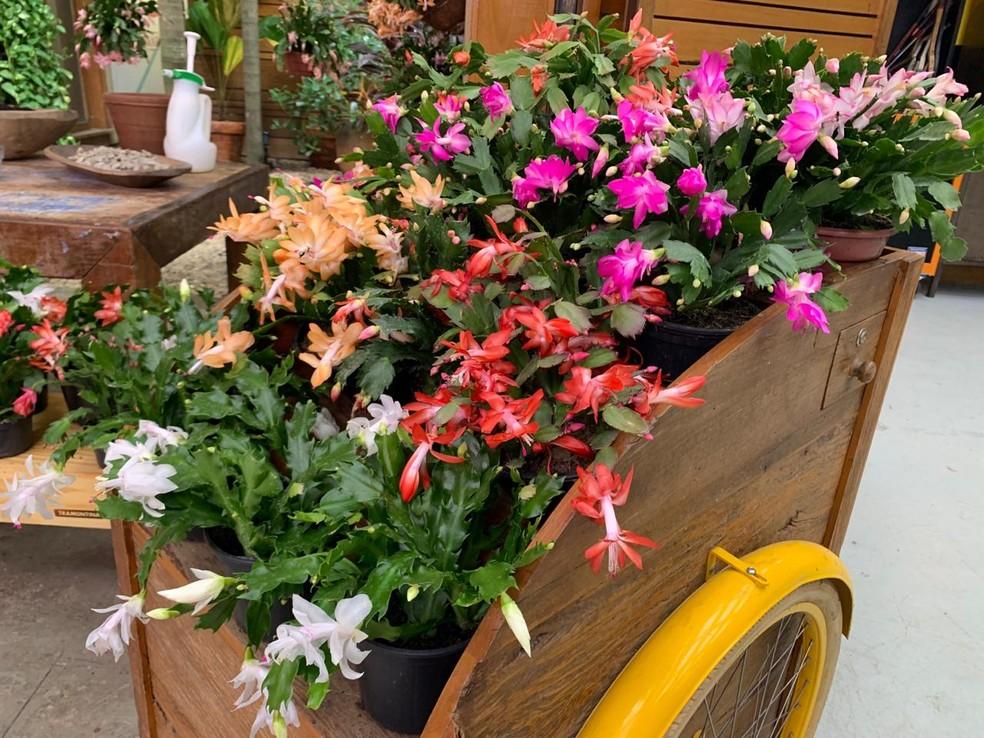 carrinho com flores