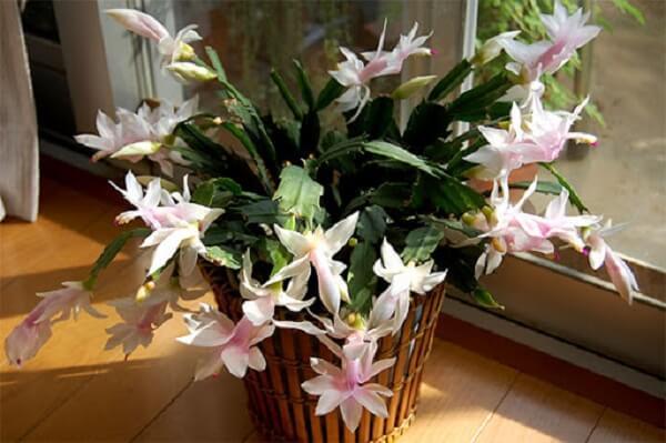 vaso com flor branca