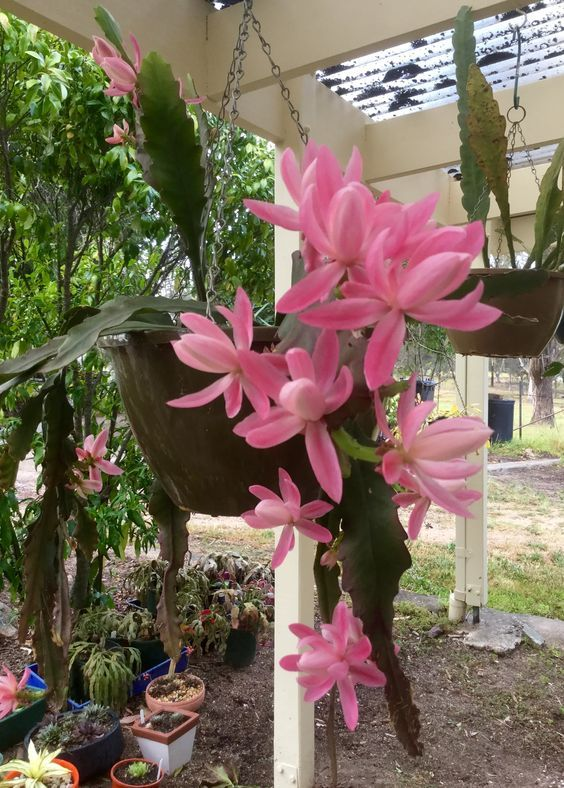 jardim suspenso no vaso