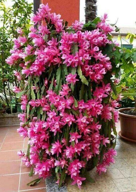 lindo jardim de flores