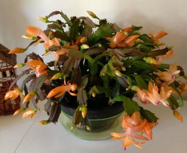 flores no vaso laranja
