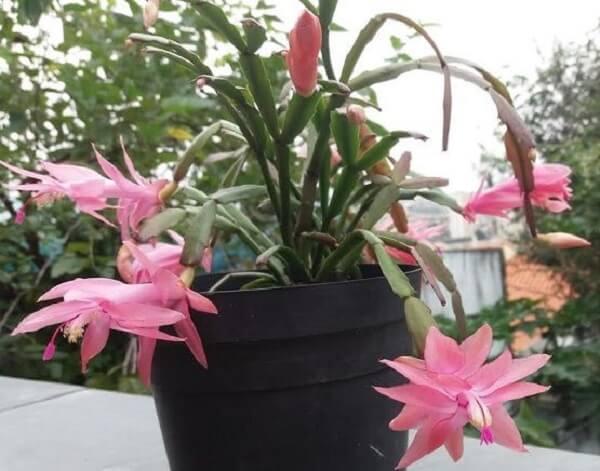 vaso simples com flores