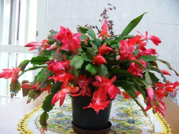 flor em cima da mesa