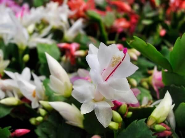 flor branca no jardim