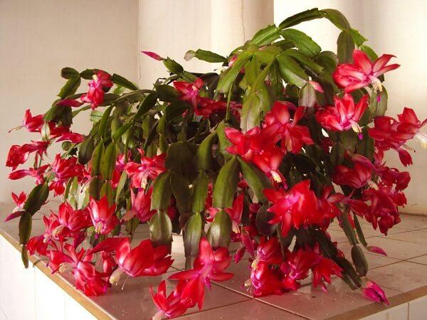 flores no vaso