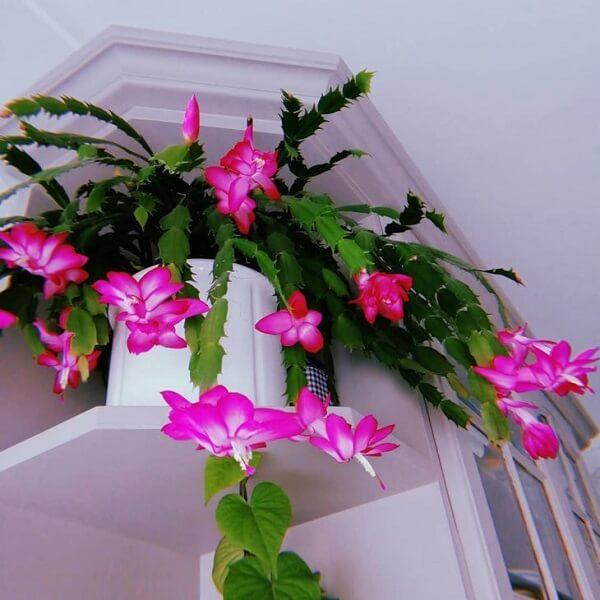 decoração com vaso