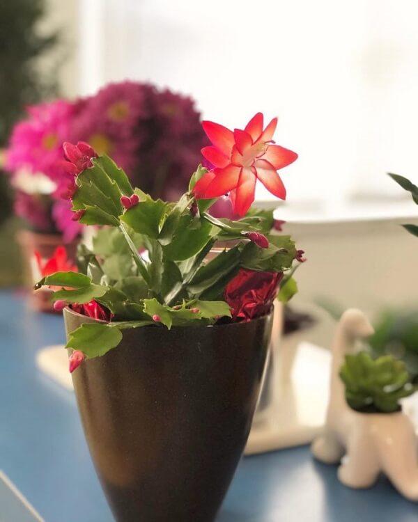 vaso decorativo com muda