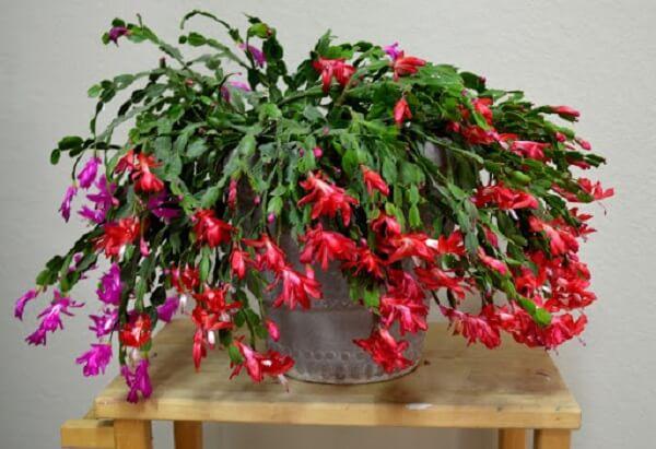 cores diferentes de flores