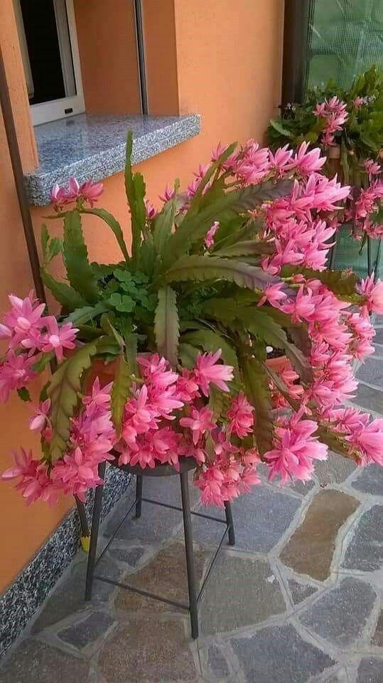 flor em cima do banco