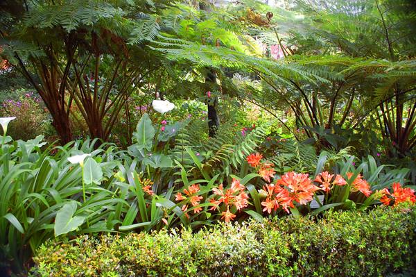 jardim externo grande
