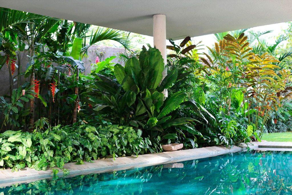 área da piscina com vegetação