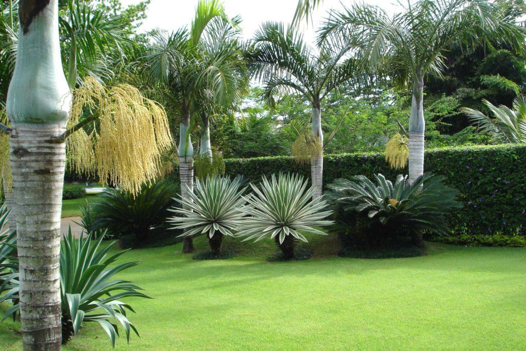jardim simples tropical