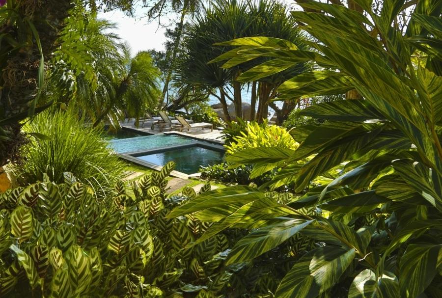 piscina com vegetação