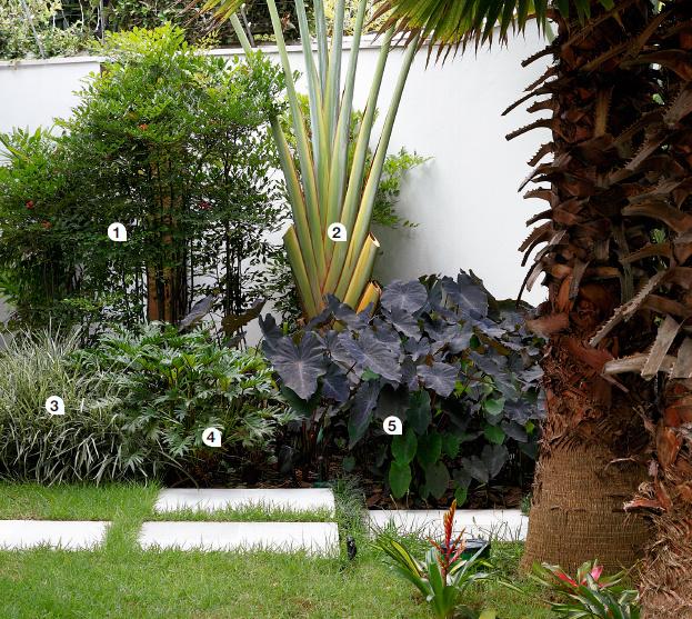 jardim tropical no quintal