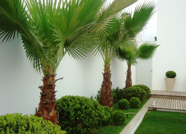 muro com jardim tropical
