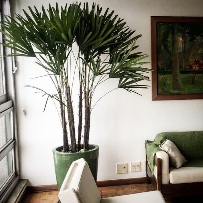 vaso decorativo com planta