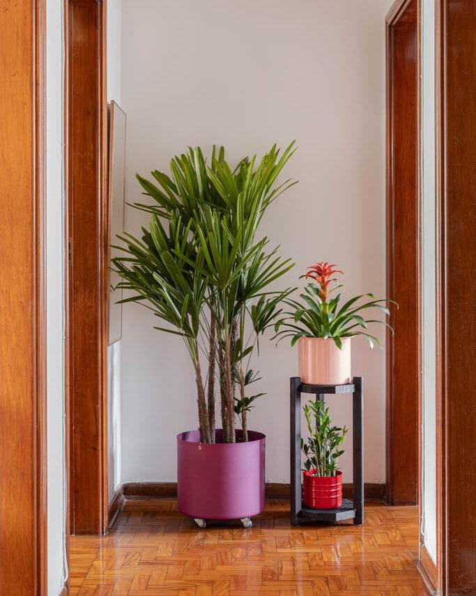 palmeira ráfia no corredor