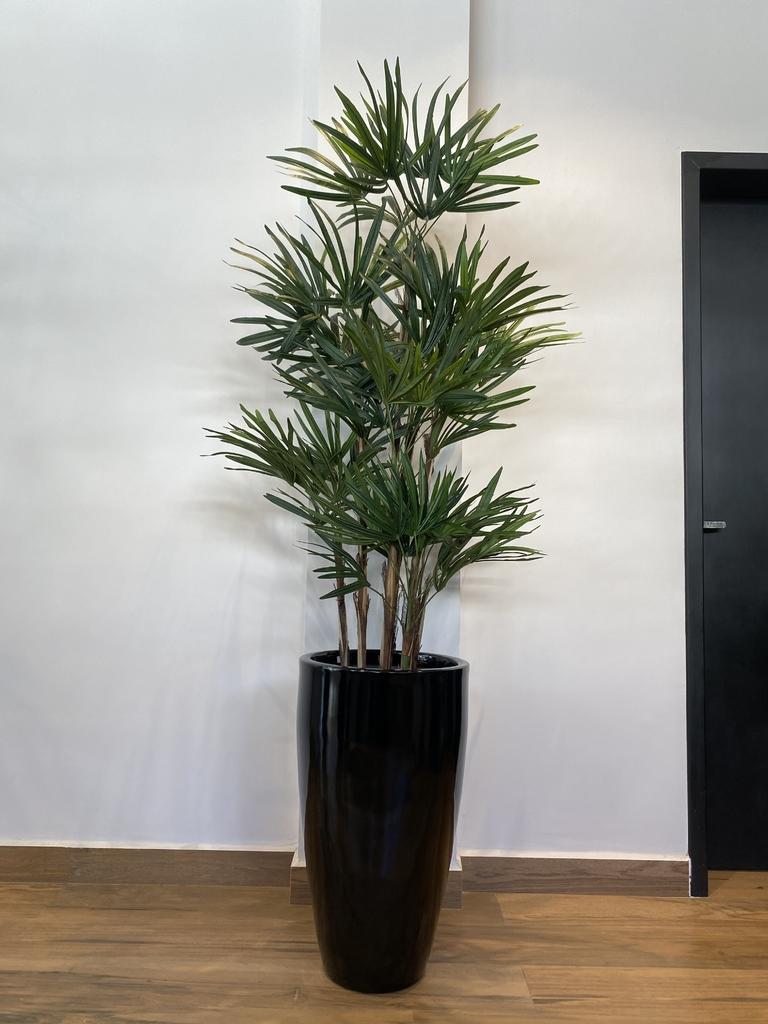 palmeira ráfia no vaso