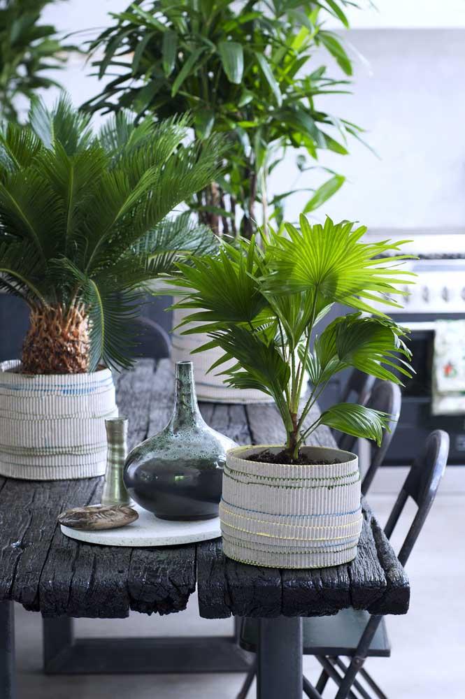 decoração de mesa com plantas