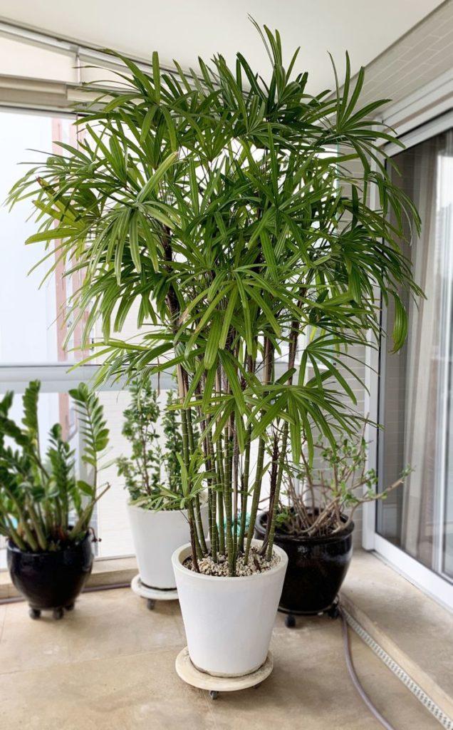 vaso branco com planta