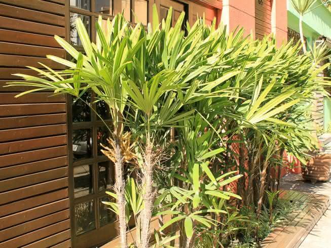 fachada com palmeira ráfia