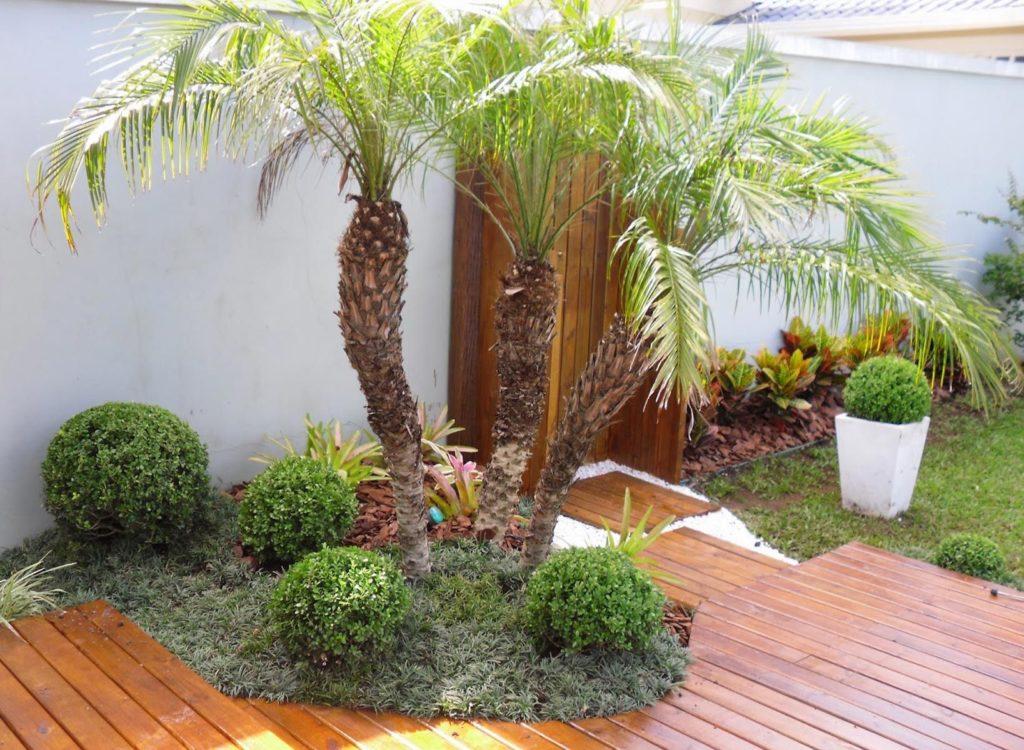 jardim com raphis excelsa