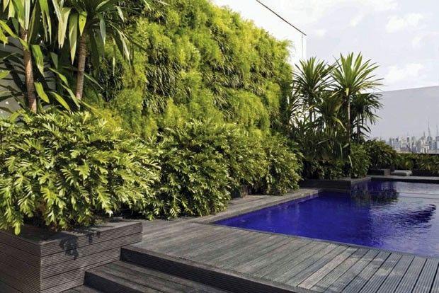 palmeira ráfia na piscina