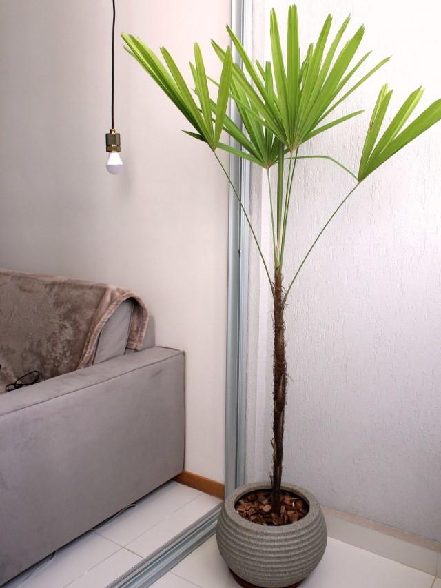 sala com vaso de planta