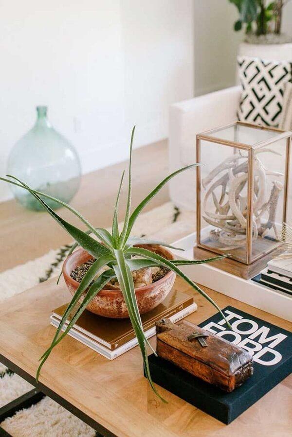 vaso rústico decorativo com babosa