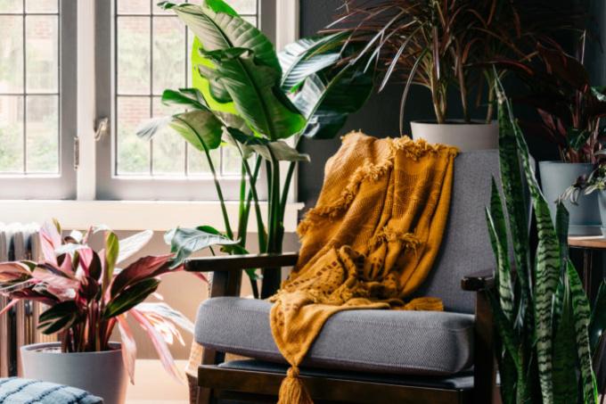 plantas grandes e médias